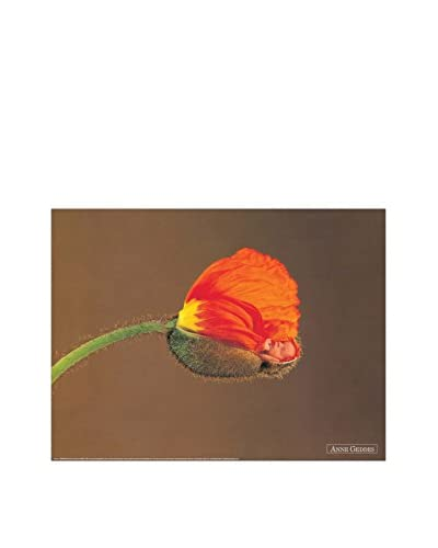 ArtopWeb Pannello Decorativo Geddes Untitled