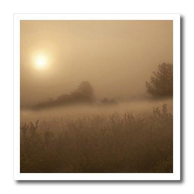 Palmer Park. Morning fog over field by Danita Delamont