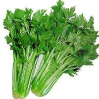 1000 TALL UTAH CELERY Apium Graveolens Dulce Vegetable Seeds