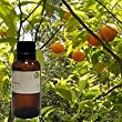 Neroli 100% Pure Essential Oil - 10ml W/glass Bottle