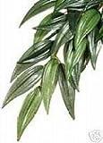 Exo-Terra Rucus Silk Plant- Large- for vivarium