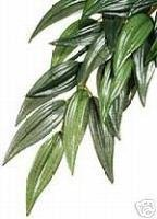 Exo-Terra Rucus Silk Plant- Large- for vivarium