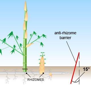 radice-bambu-stop-barriera-per-radici-e-rhizomes-con-controllo-root-barrier-heavy-duty-2-mm