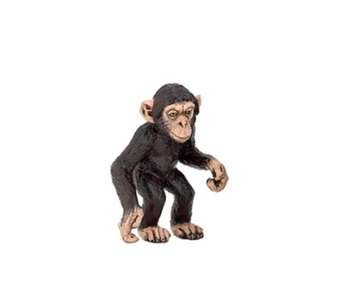 Chimpanzee Chimp
