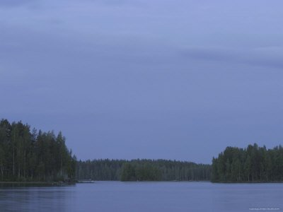 Tall Pine Trees Overlooking a Calm Lake with an Overcast Sky