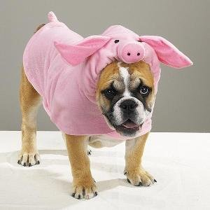 Casual Canine Piggy Pooch Pet Costume Med