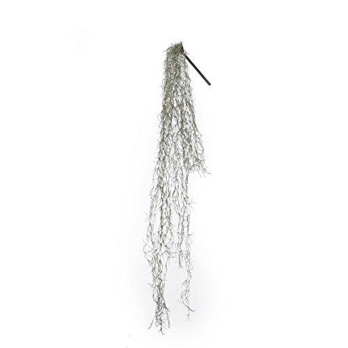 953669-T Kunstblume -und Pflanze, 2-er Set Hängepflanze Tillandsien Länge 115 cm, hellgrün