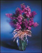Flower of the Month Club - 3 monthsB0000DZ0Q4 : image