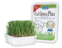 Cat Supplies Cat Grass Plus 150Gm (Tub)