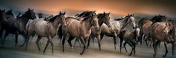 Animal Wild Horses Poster