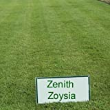 Zenith Zoysia Grass Seed - 1 LB