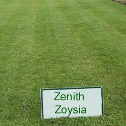 Amazon.com : Zenith Zoysia Grass Seed - 5 LBS : Grass