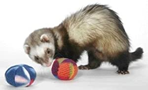 Ferret Bell Toy - Ft-154 - Bci