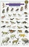 Mammals and Birds (0898865956) by MacGowan, Craig