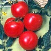 Arkansas Traveler, A 100 year old heirloom tomato- 25 Seeds