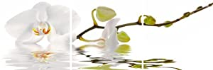 Platin Art Peel n'Stick Prints Wall Decals, Orchid Reflection