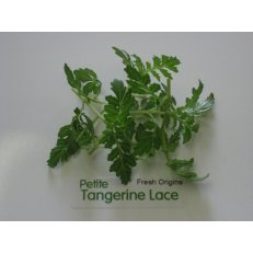 Petite Greens - Tangerine Lace - 4 x 8 oz by For The Gourmet