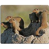 luxlady-gaming-mousepad-banded-mongoose-family-basking-on-a-termite-mound-etosha-national-park-namib