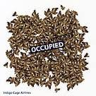 Occupied Vacant
