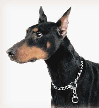 C Titan Chain Choke Heavy 3.0mm 18 coastal pet circle t latigo rolled leather dog collar 16 l x 1 2 w