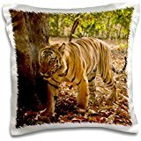 Tigers - India, Bandhavgarh Park, Bengal Tiger 16x16 inch Pillow Case