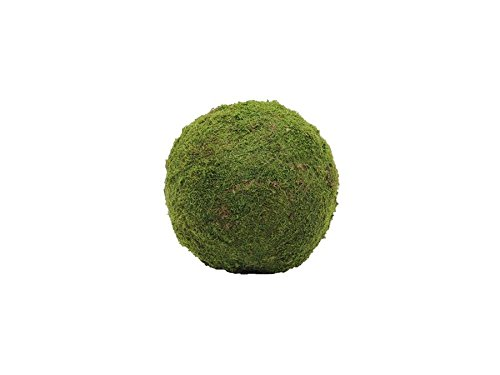 europalms-moss-ball-green-ca30cm
