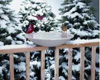 Cheap EZ Deck Tilt and Clean Heated Bird Bath (BS-ALLIEDPR650)