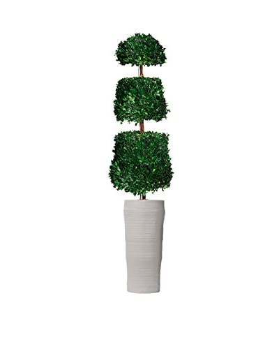 Laura Ashley 65 Preserved Natural Boxwood Cone Topiary in a Planter