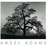 Art Poster Print - Oak Tree-Sunset City - Artist: Ansel Adams - Poster Size: 30 X 24 inches