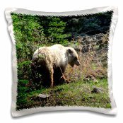 krista-funk-creations-bears-grizzly-bear-looks-over-his-shoulder-while-chewing-on-yummy-roots-yukon-