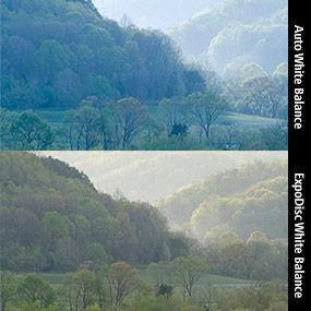 Copyright Terry Livingstone. ExpoDisc Before and After.