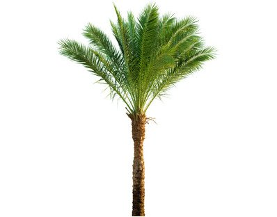 Stickers palmier pas cher for Palmier artificiel moins cher