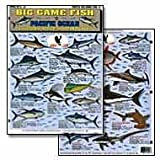 Tightlines - Big Game Fish of the Pacific #2 Chart