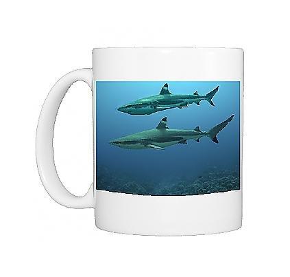 The Blacktip Shark
