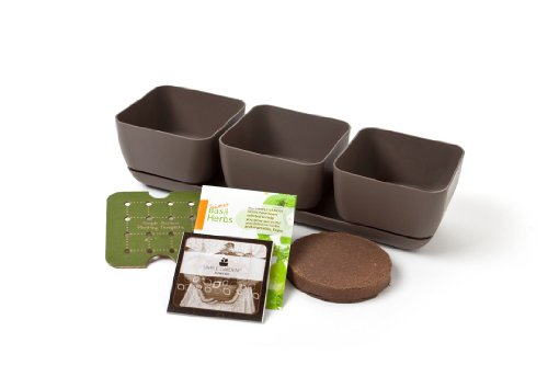 Simple Garden Junior SGJR-3PC-MOC Oregano, Basil and Cilantro Herb Garden Kit, Mocha