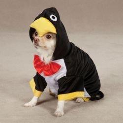 penquin dog costume