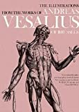 img - for The Anatomical Drawings Of Andreas Vesalius book / textbook / text book