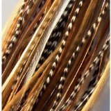 8 -12 in Length Beautiful Natural Beige & Brown Feathers for Hair Extension with Mixes of Browns & Beiges Feathers with Salon Quality 5 Feathers