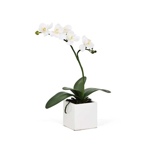 Torre & Tagus 1684-100000 16-Inch Orchid Potted Single Stem, White