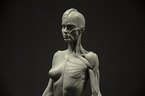 List of Anatomy Human Figure Mannequins for Artists | Parka Blogs