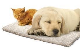 self-heating-pet-dog-cat-pad-mat-bed