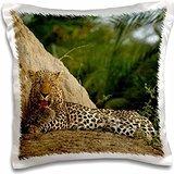 leopards-leopard-termite-mound-mombo-okavango-delta-16x16-inch-pillow-case