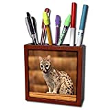 31MIYCpcDsL. SL160  Danita Delimont   Wildlife   Tanzania, Ngorongoro Conservation, Civet wildlife AF45 RBE0377   Ralph H. Bendjebar   Tile Pen Holders 5 inch tile pen holder