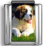 Saint Bernard Dog Photo Italian Charm
