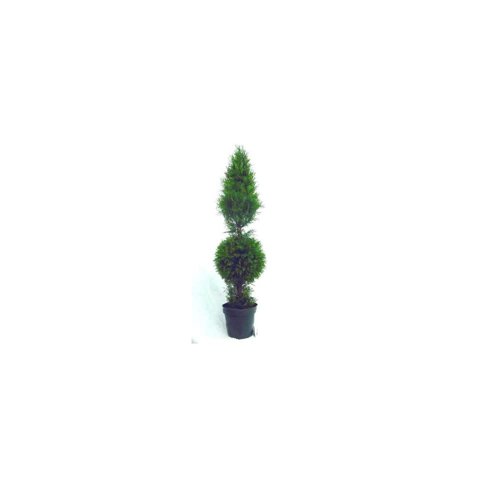 National Tree Company LCYT 700 48 48 Inch Juniper Cone and Ball Topiary Tree in Green Round Plastic Pot