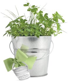 Herbs in a Pail: the easy, all-in-one indoor herb garden!
