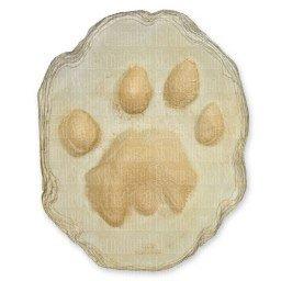 African Lion Footprint (22x18.5cm)