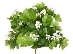 Amazon Com Silk Plants Direct Shamrock Flower Bush Pack