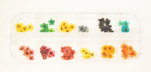 天然押し花 ドライフラワー12色60枚セット ネイルアートやデコレーションに