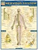 Nervous-System-Laminate-Reference-Chart-Quickstudy-Academic